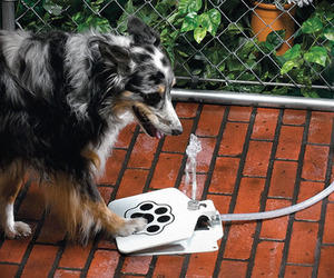 Doggie-fountain-m