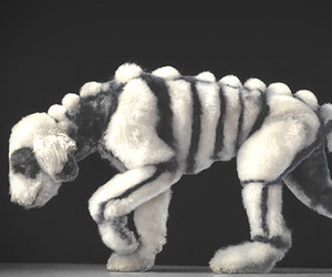 Dogs-gods-by-tim-flach-m