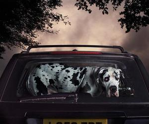 Dogs-in-cars-martin-usborne-m