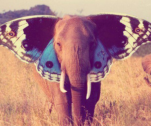 Elephants-make-pretty-butterflies-m