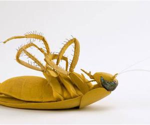 Eva-avidar-still-cockroach-m