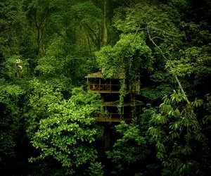 Finca-bellavista-sustainable-forest-treehouse-community-m