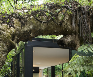 Forest-home-in-new-zealand-by-chris-tate-m