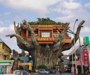 Gajumaru-tree-house-in-japan-m