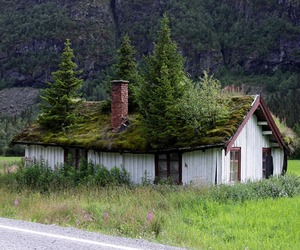 Going-green-with-grass-roof-tops-m