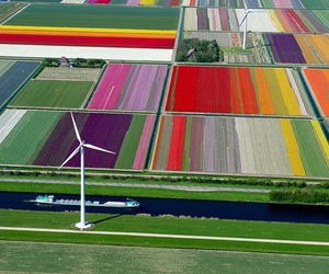 Gorgeous-aerial-photos-of-tulip-fields-in-the-netherlands-m