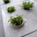 Grey-to-green-pavers-s