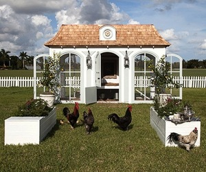 Heritage Hen Mini Farm for $100,000