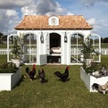 Heritage-hen-mini-farm-for-100000-s