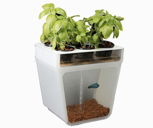 Home Based Aquaponics Garden