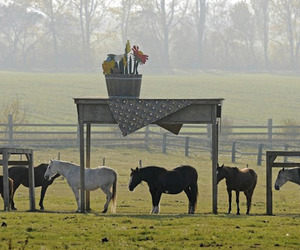 Horse-shelter-in-germany-m