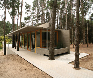 House-among-trees-m