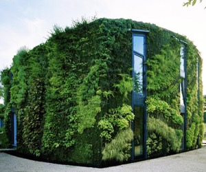 House-covered-in-a-lush-green-vertical-garden-m
