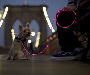 The Pup Crawl Illuminated Dog Leash