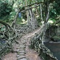 Incredible-root-bridges-of-cherrapunji-s