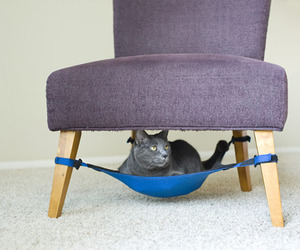 Ingenious-hammock-like-cat-crib-m