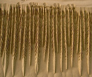 Intricate-and-unfathomable-artistry-of-nature-and-sand-m