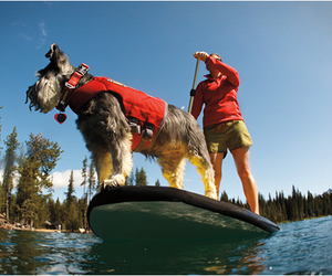 K-9-float-coat-by-ruffwear-m