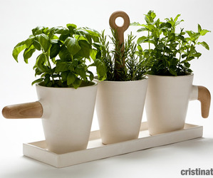Kitchen-herb-in-pot-by-cristina-toledo-m