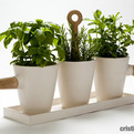 Kitchen-herb-in-pot-by-cristina-toledo-s