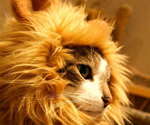 Amusing Lion's Mane Cat Hat