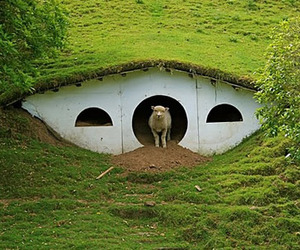 Lord-of-the-rings-abandoned-hobbiton-is-now-home-to-sheep-m