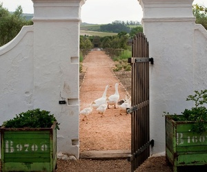 Lost-and-found-paradise-at-babylonstoren-africa-m