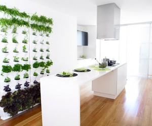 Mini-vertical-garden-for-your-kitchen-patio-or-balcony-m