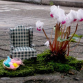 Miniature-gardening-by-the-pothole-gardener-s
