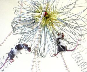 Mouse-mates-m