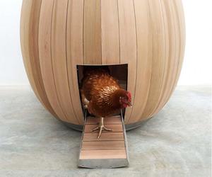 Nogg-helps-sheltering-hens-elegantly-m