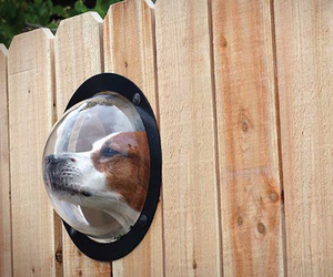 Petpeek-window-for-your-fence-m