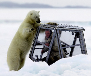 Photographer-comes-face-to-face-with-a-hungry-polar-bear-m