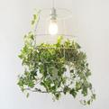Photosynthesis-lamp-s
