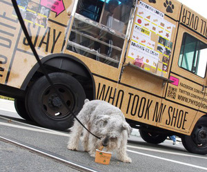 Phydough-gourmet-food-truck-for-dogs-m