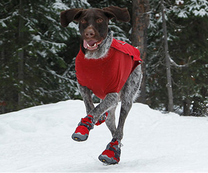 Polar Trex Dog Boots