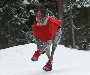Polar-trex-dog-boots-m