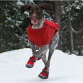 Polar-trex-dog-boots-s