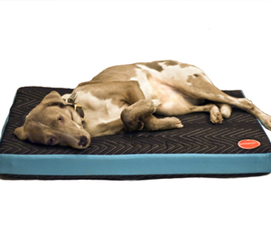 Project71-dog-bed-m