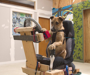 Rescue-dogs-learn-how-to-drive-a-car-m