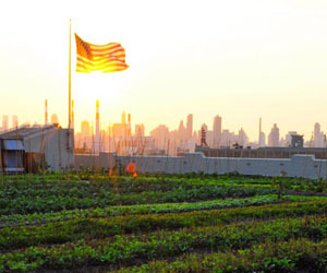 Rooftop-farming-the-next-american-frontier-m