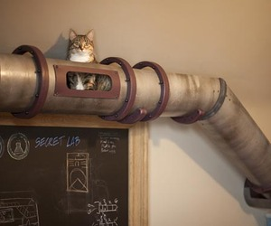 Secret-steampunk-cat-tunnel-m