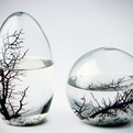 Self-sustaining-ecosphere-by-nasa-s