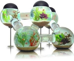 Six-room-silverfish-aquarium-m