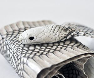 Snakewrap-belt-and-clutch-by-luxirare-m