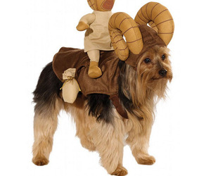 Star-wars-dog-costumes-m