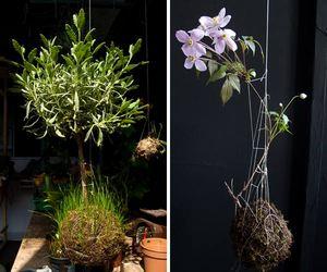 String-garden-m