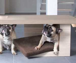 Tavolato-pet-bed-by-petsmood-m