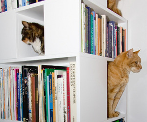 The-catcase-a-bookcase-and-a-ideal-playground-for-your-cat-m