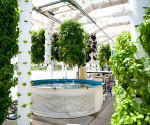 The-farm-of-the-future-aquaponics-m